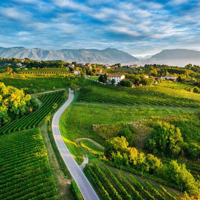The wine roads - Visit Conegliano