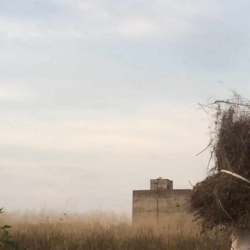 Oltre il sogno dei Borgia - Visit Conegliano