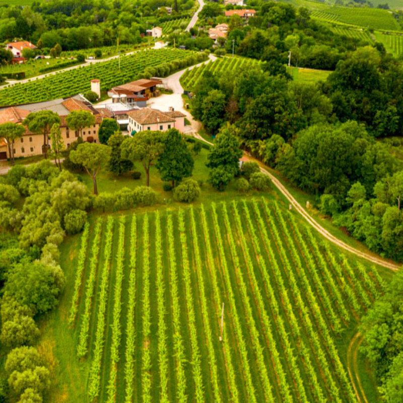 Azienda vinicola San Giovanni Perini - Visit Conegliano