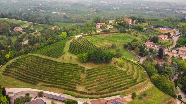 Biancavigna S.S. società agricola - Visit Conegliano